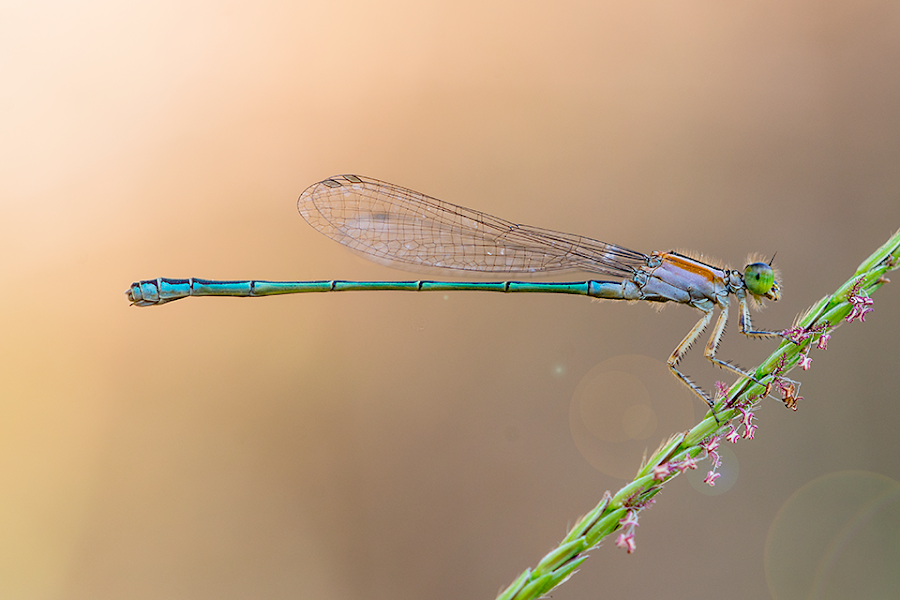 by Alvian Hp - Novices Only Macro