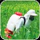 Bulário Defensivos Agrícolas Android apk