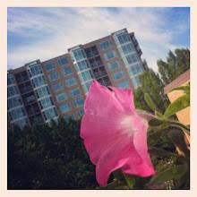 Photo: Beautiful painted blue sky & a pink flower #sky #cloud #flower #plant #summer #sunny - via Instagram, http://instagr.am/p/Mq_-xGJfoe/