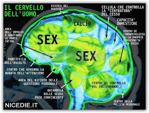 una tac del cervello maschile, si vedono chiaramente le aree, sesso, sesso, calcio, il centro di controllo del telecomando...