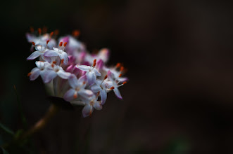 Photo: this is turning out to be a flowery week...  #flowers  #floralphotography