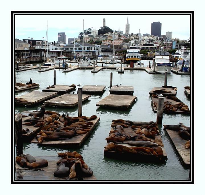 Nel porto c'è vita e... vita! di kaira