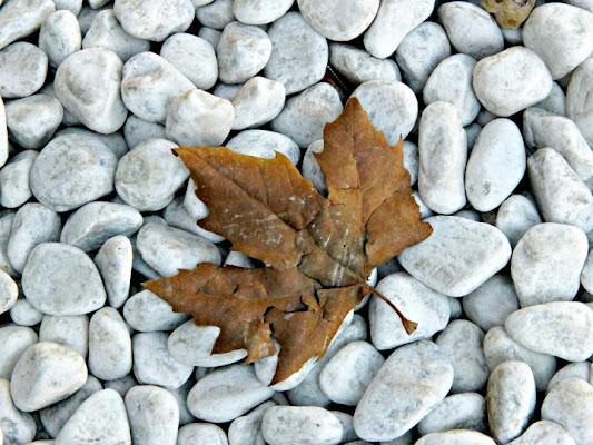 Si sta, come d'autunno... di Bins
