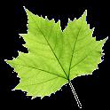 TreeLogy icon