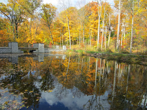Photo: Golden fall leaves reflected in Dogwood Pond at Hills and Dales in Dayton, Ohio.