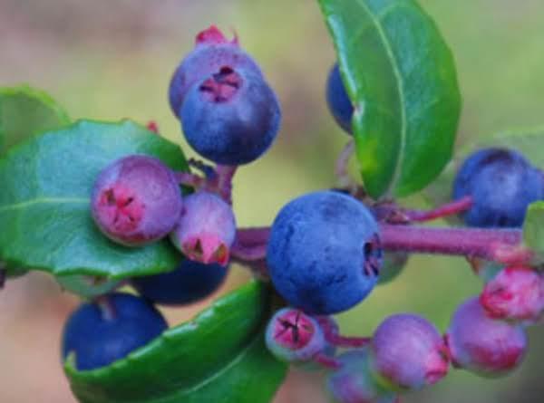 Huckleberry Sauce Recipe