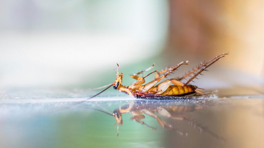 Columbia Pest Control - Pest Control Service