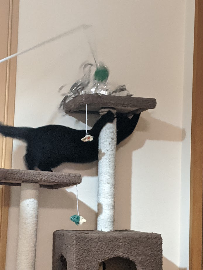 さらにメチャクチャメッキテープ猫じゃらしで遊ぶクロミ