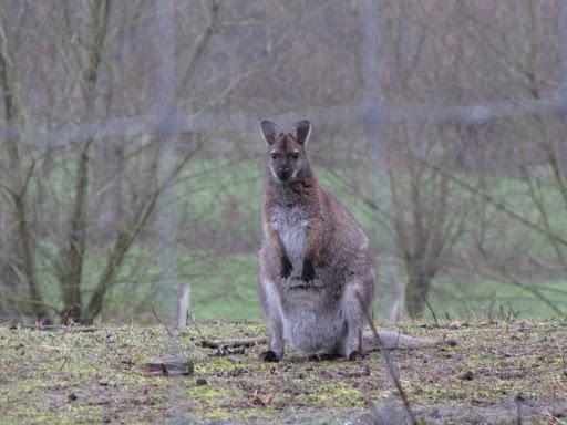 ... rare snuiters! (Alpaca's en kangoeroes)
