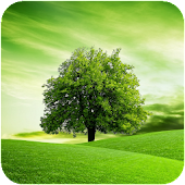 Tree HD Wallpapers