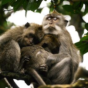by Richard Beckmann - Animals Other Mammals