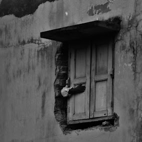 Window by Projit Roy Chowdhury - Buildings & Architecture Other Exteriors