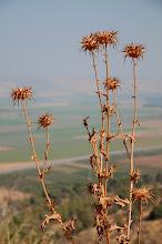 Photo: Hazy Galilee