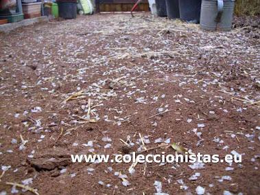 Coleccionistas.eu - Analisis del invernadero de bajo coste