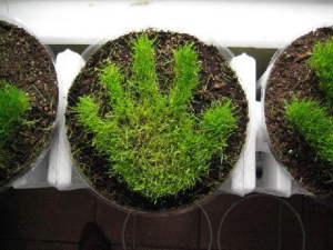 Grassy Handprint.jpg