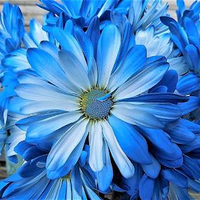 by Mary Gallo - Flowers Single Flower ( single flower, flower arrangement, flowers,  )