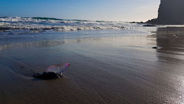 Un ejemplar de carabela portuguesa, hace unos días en la playa de Mónsul.