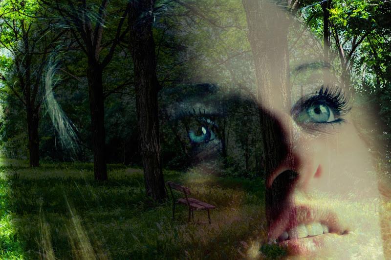 La panchina nel bosco... di enzoprisciandaroshot