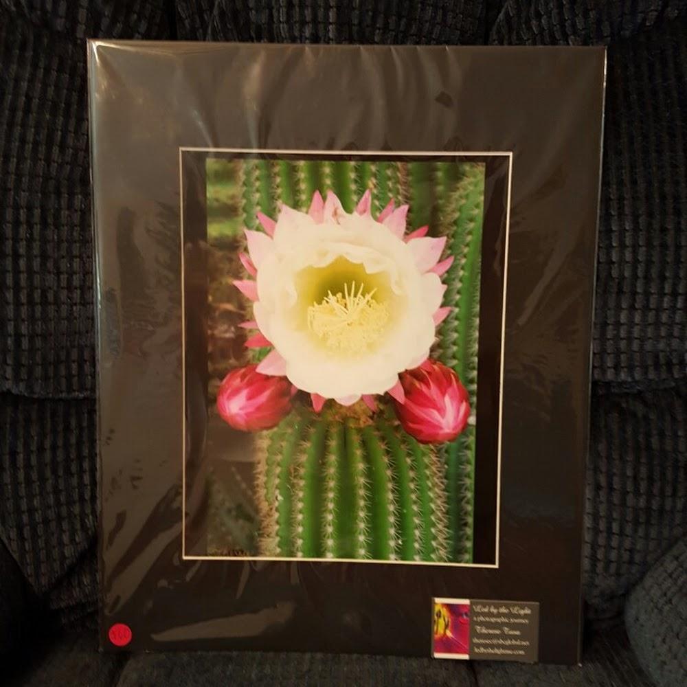 Sicilian Cactus