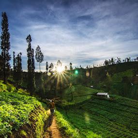 A Morning Glory by Alfon Adalah Klepon - Landscapes Mountains & Hills ( mountain, farmer, morning glory, sunshine, fields,  )
