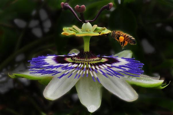 sarà miele di flori