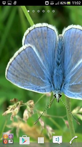 Best butterfly wallpapers