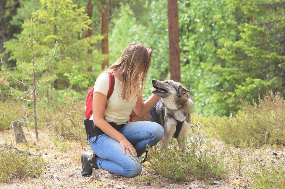 wandelen-huskies-lapland