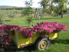 Photo: Caretto con fioriGirasole terme saturnia agriturismo