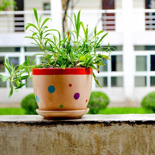 遊戲App|室內植物裝飾手機 LOGO-3C達人阿輝的APP