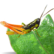 App Icon for Grasshoppers of the Western US App in Czech Republic Google Play Store