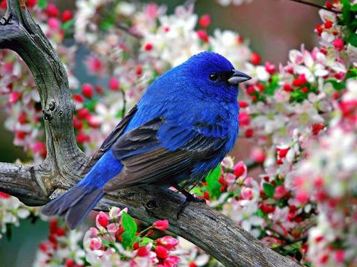 Bird HD Live Wallpaper