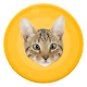 Human to cat translator - free apk