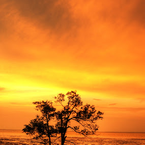 The Golden Hour by Ivan Lim - Landscapes Sunsets & Sunrises ( orange, silhouette, sea, yellow, beach, seaside, landscape, sky, tree, nature, sunset, low tide, golden )