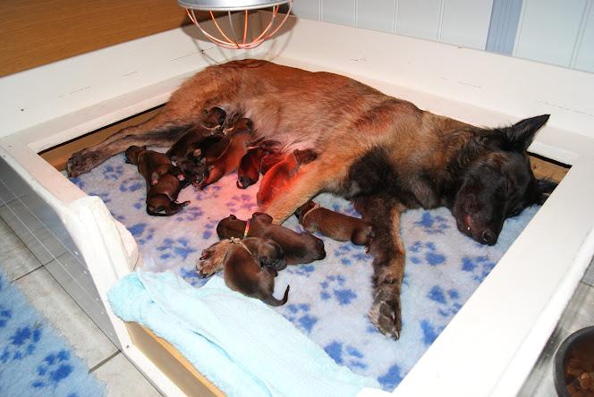 Cassy en haar pups, 2 dagen oud