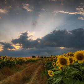 On the roads of the field... by Dimitar Balyamski - Landscapes Prairies, Meadows & Fields ( dscf0054 )