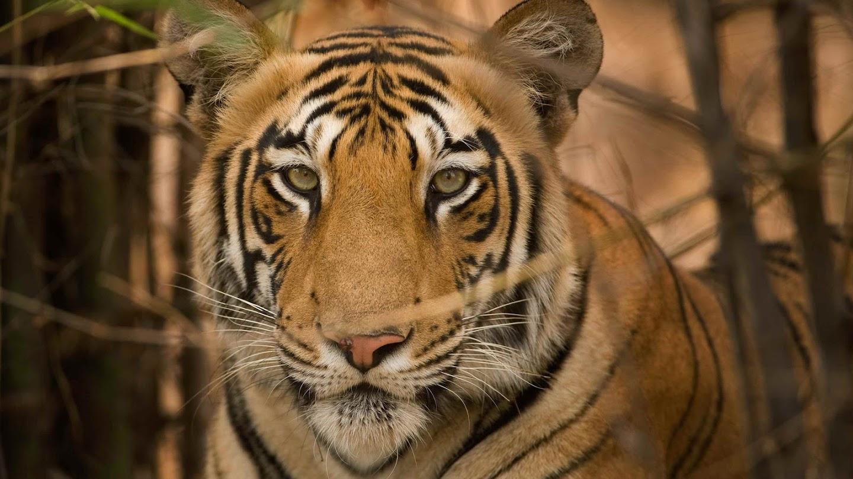Secrets of Wild India