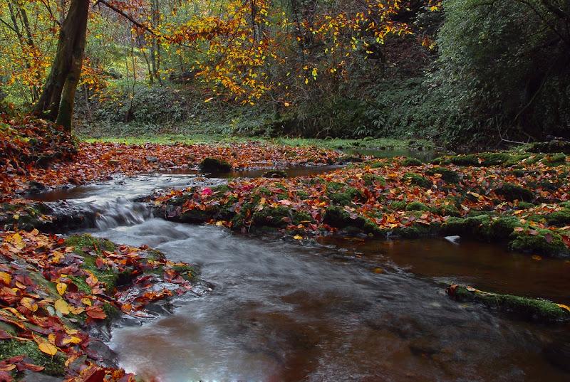 Torrente d'autunno di BASTET-Clara
