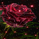 Download Magical Rose Live Wallpaper For PC Windows and Mac