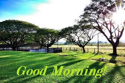 Nature Morning Images - screenshot