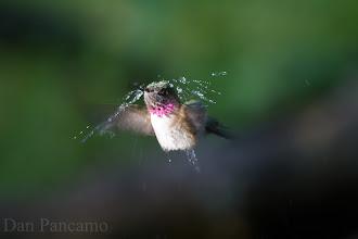 Photo: Calliope Shower