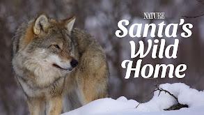 Santa's Wild Home thumbnail