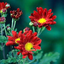 Smiling in the wilderness by Rahana Habeeb - Flowers Flowers in the Wild ( red, plants, forest, flowers, wild flowers )
