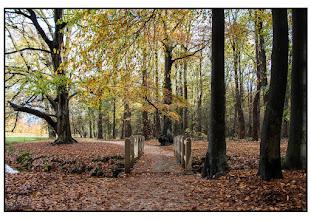 Photo: Natuur Bos in de herfst. Foto Bert Morsink