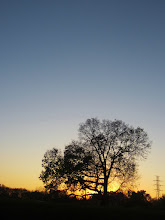 Photo: Orange and periwinkle sunset behind a tree at Eastwood Park in Dayton, Ohio.