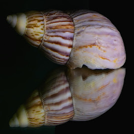 Sea Shells 14 by Dave Walters - Artistic Objects Signs ( sea shells, nature, colors, artistic, lumix fz2500,  )