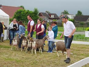 Photo: Rubriek 1: eenjarige toggenburger geiten.  1a. Flora vd Lage Landen; 1b. Sarie's Ingrid JH; 1c. Sarie's Irene JH: 1d. Katrien vd Lage Landen; 1e. Zwaanheuvel Anke 34.
