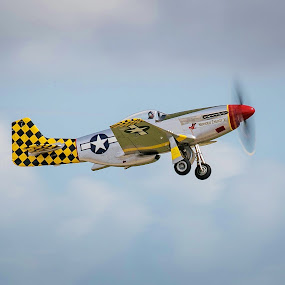 P-51 Mustang by Rodney Rodriguez - Transportation Airplanes