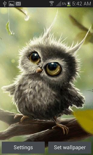 Cute Owl Baby LWP