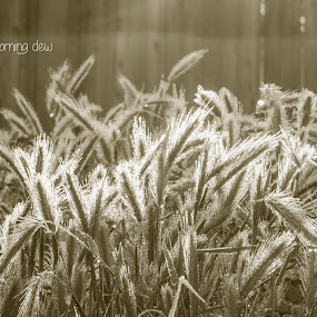 dewy evanesence by Denise Johnson - Typography Captioned Photos ( monochromatic, monochrome, quote, dew, sunrise, weeds,  )