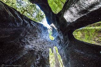 Photo: Inside the Burnt Tree